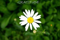Living Mind Tool Box. gratitude